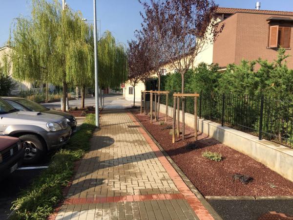 Lapillo Vulcanico - Collegno  Torino