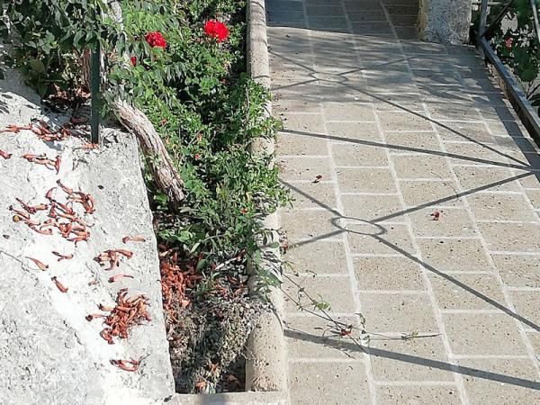 Giardino Privato - Imperia